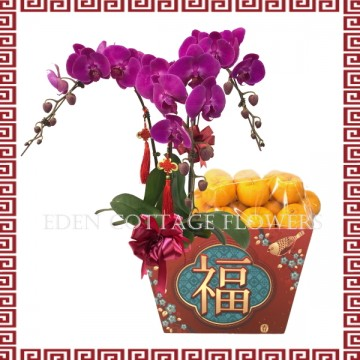 CNY Mandarin Oranges Basket with Phalaenopsis Orchids CNF04