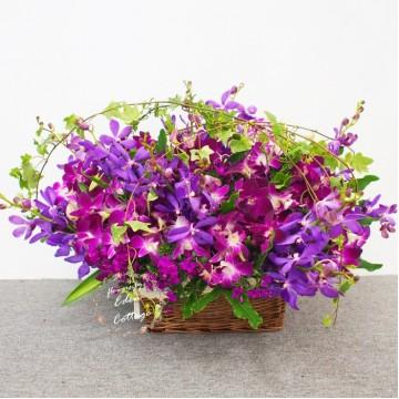 Orchids Basket OFA1