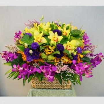 Orchids Basket OFA4