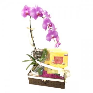 Tonics Basket & Orchid TNF12